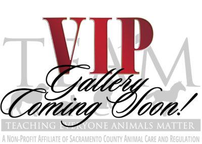 2016 VIP Guests